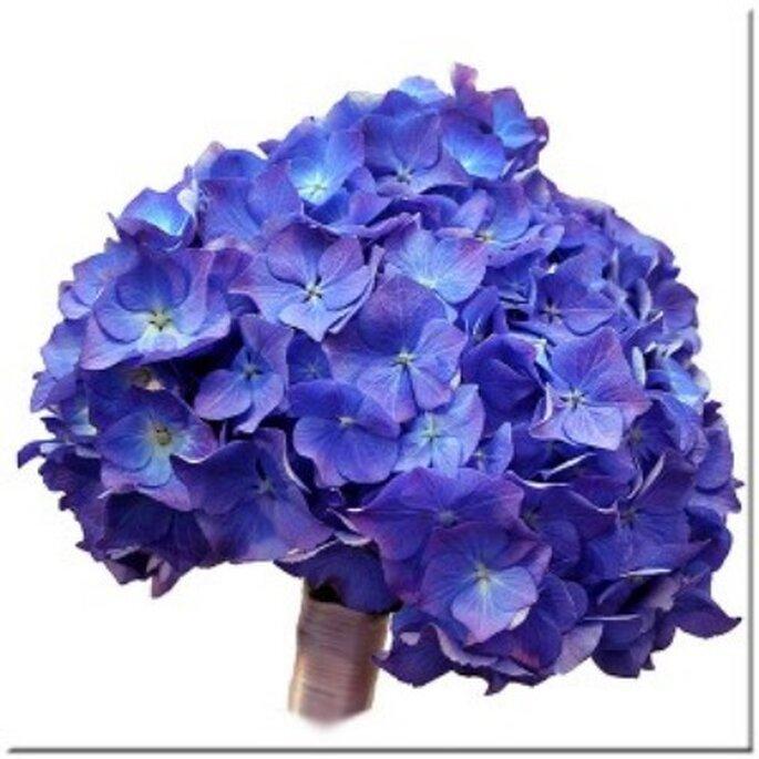 Ramo de novia a base de flores de hortensia azules - Ten siempre flores