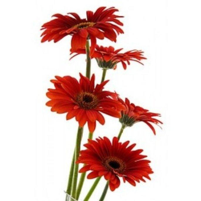 Fleur de gerberas rouge - Réalisation Fleurs-a-l-unite.com