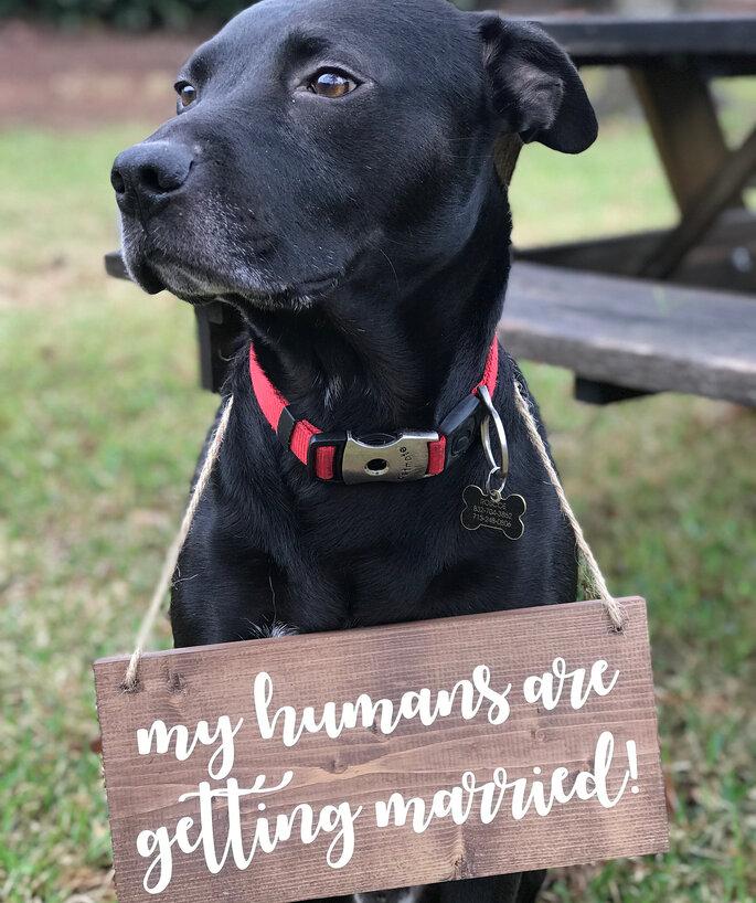 cão com placa save the date