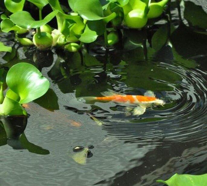 Agrega algo de plantas de agua se vera sensacional.  Foto: Shoe the Linux Librarian.