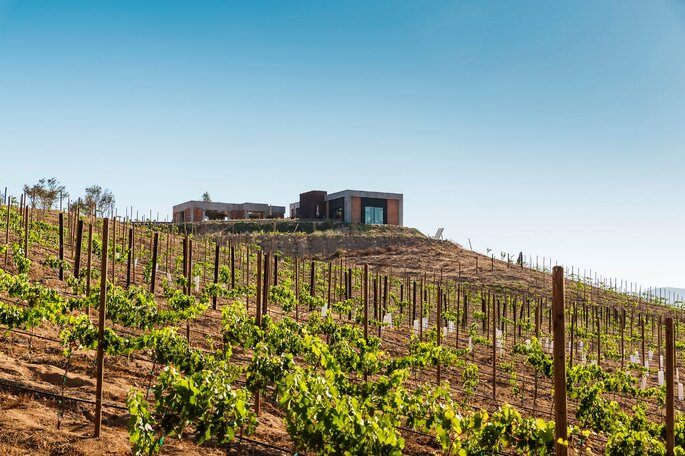 Valle de Guadalupe, viñedos