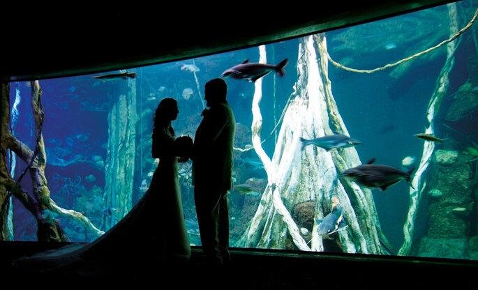 Foto: Mallorca Palma Aquarium