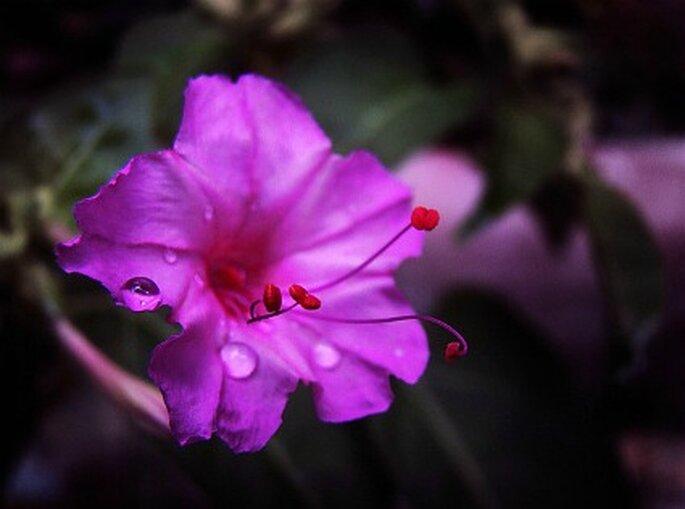 "Toda flor de color violeta de brinda ""relax"" . Foto: BrunoC."
