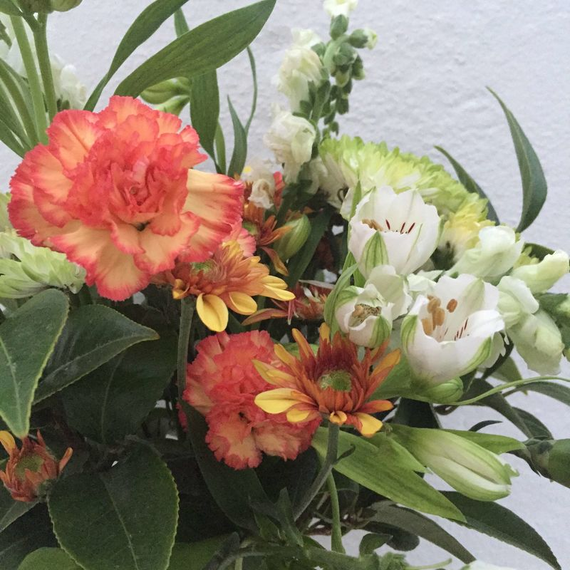 Gaivota Flores