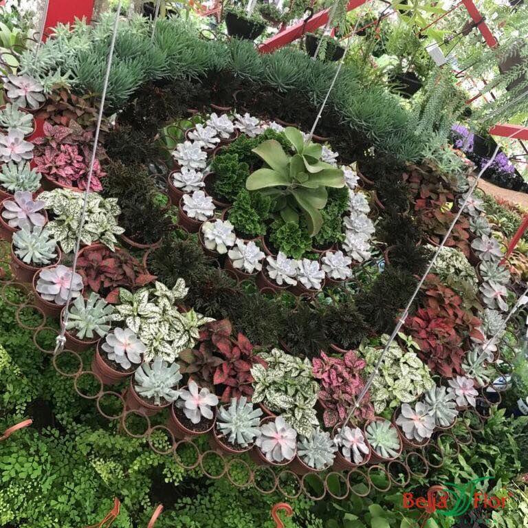 Floricultura Beija Flor