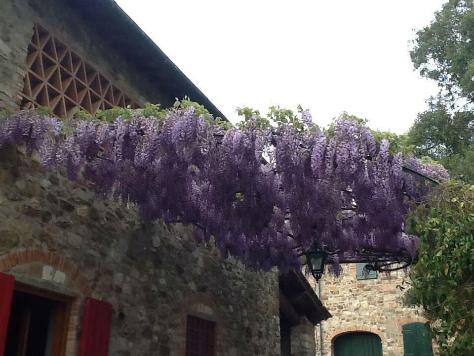 Podere Casacce...nel cuore del Chianti