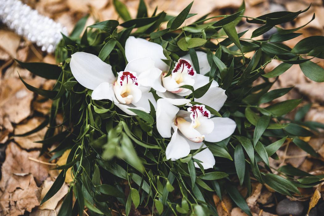 Orquídeas y brillos