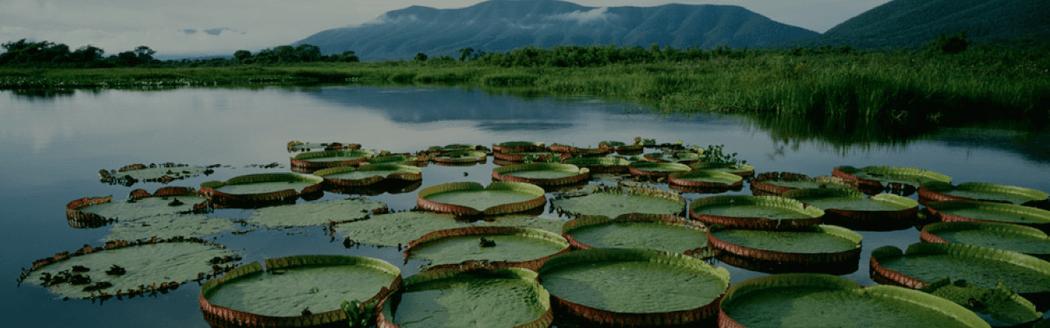 Paraíso Ecológico