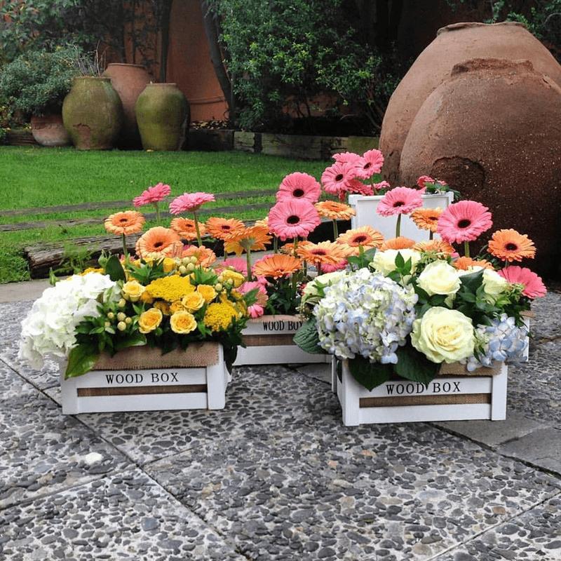 Papiro Flores