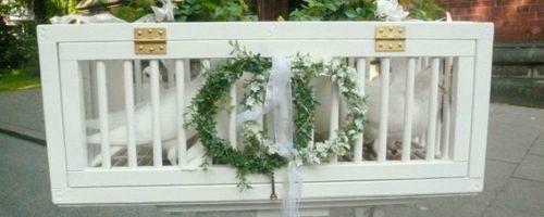 Hochzeitstauben-HH