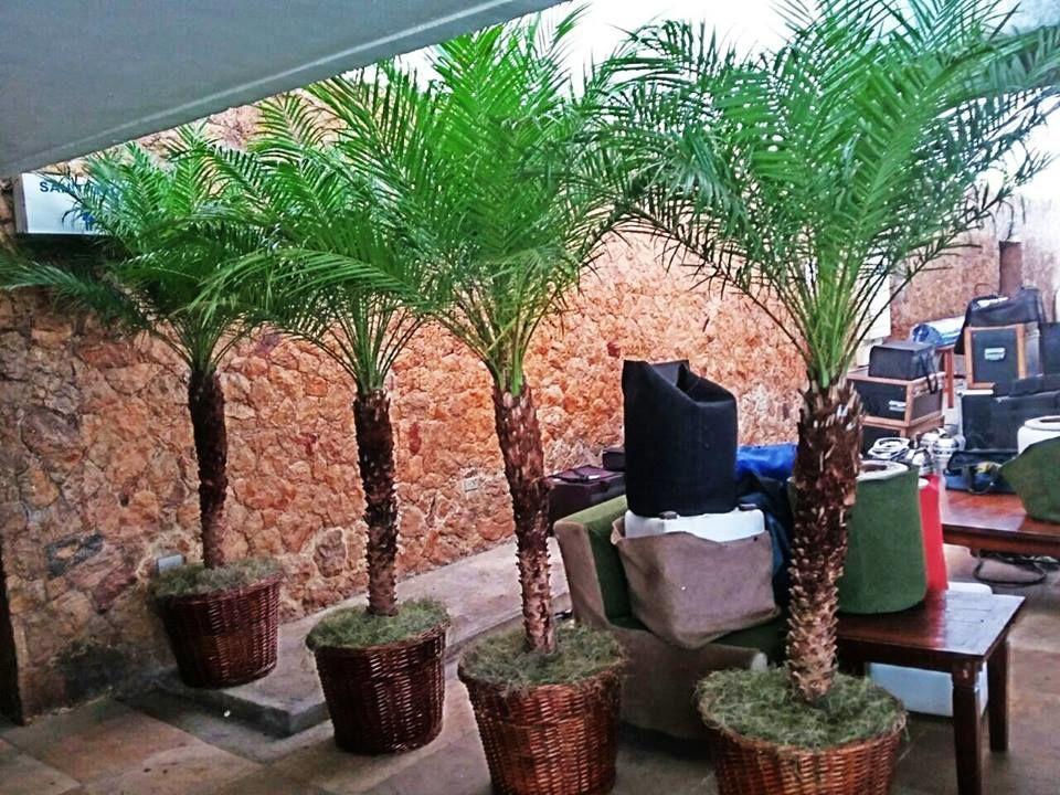 Araújo Verde Plantas