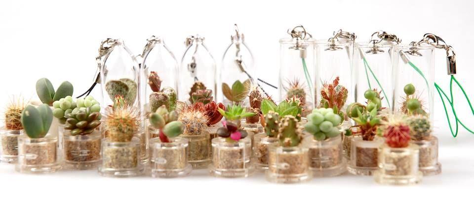 Baby Plante