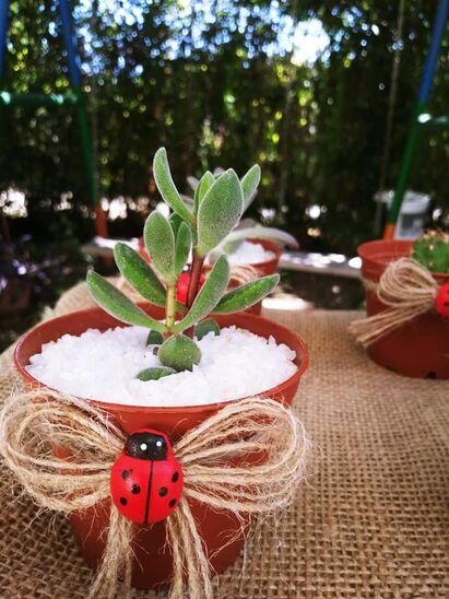 Recuerdos Vivos cactus y suculentas