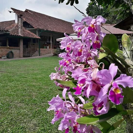 Hacienda El Orquideal