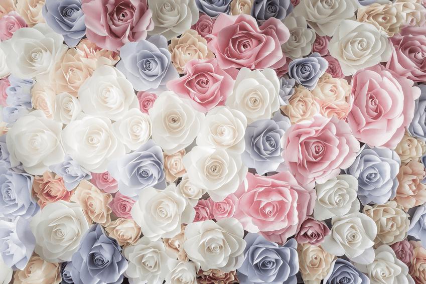 Dely Fleurs
