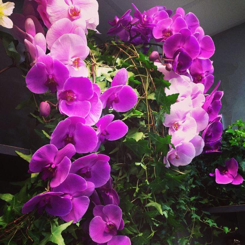 Lévis fleurs