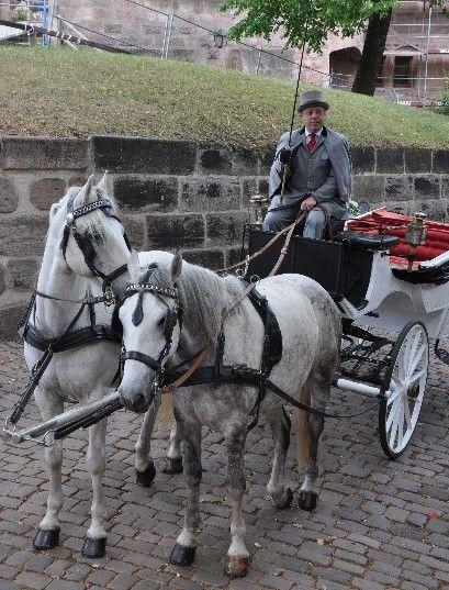 Beispiel: Kutschgespann, Foto: Wilhelm Schuh Hochzeits- und Kutschfahrten.
