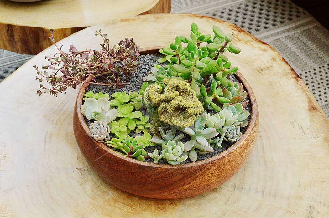 Vivero Garden Service