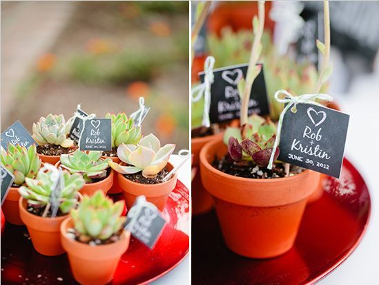 Plantitas personalizadas