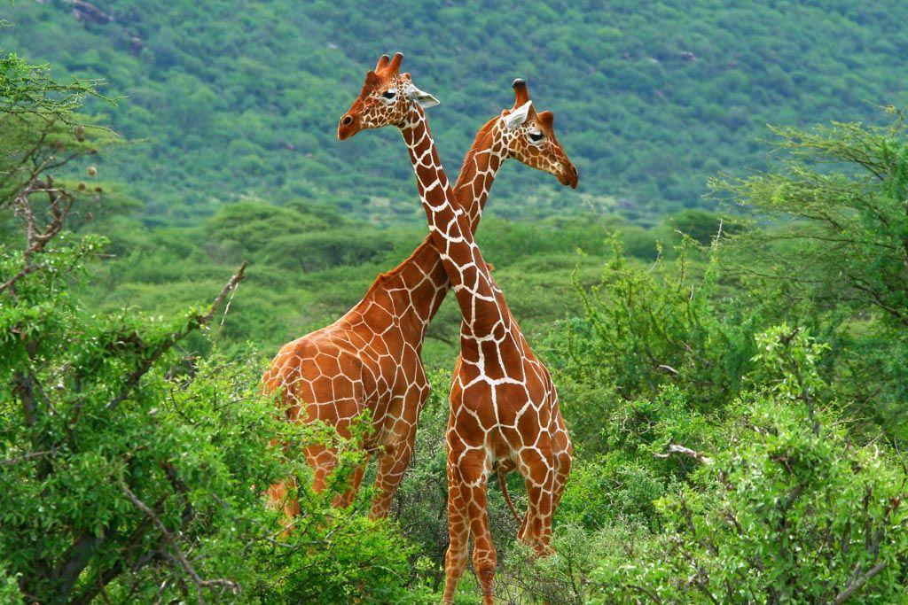 Samburu, Kenia