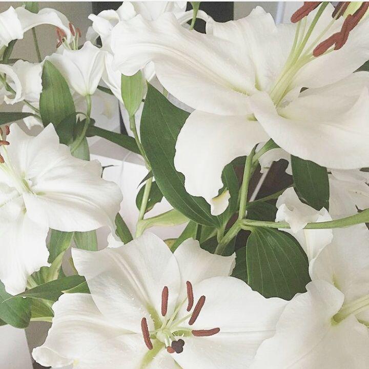 Florería Primavera
