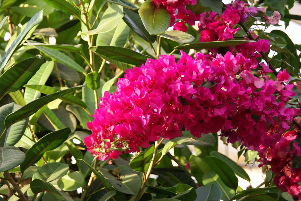 Tropisch Bos Omnium