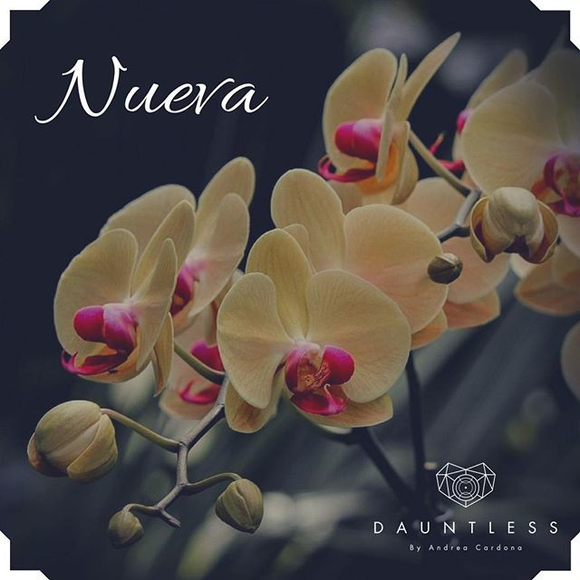 Dauntless by Andrea Cardona