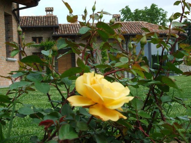 Cascina Alessi - Rose di maggio