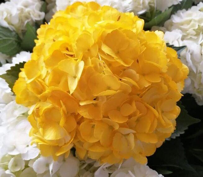 Easy go flowers co