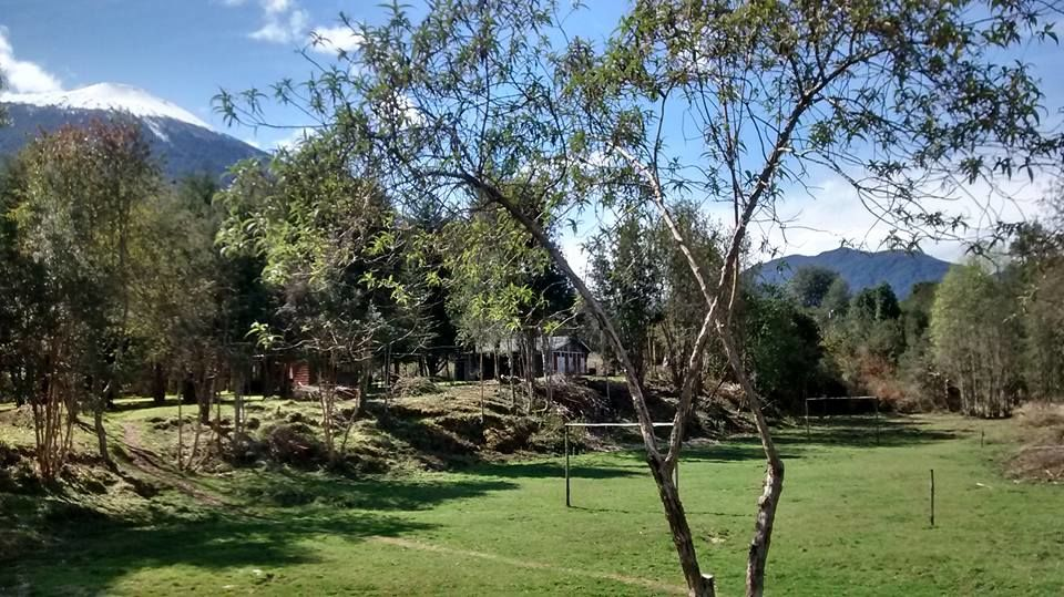 Bosque Patagónico