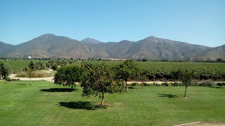Montaña Nativa