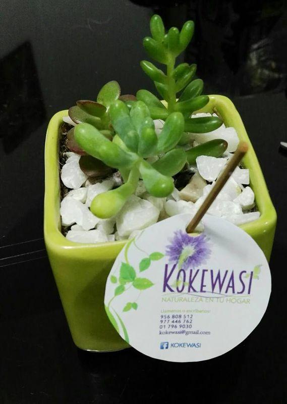 Kokewasi