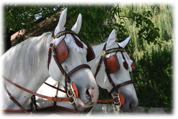 Beispiel: Die Pferde, Foto: Fiaker Wien.