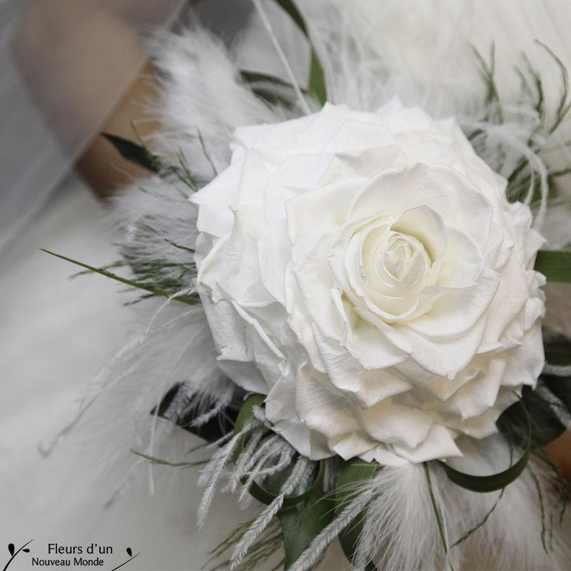 Fleurs d'un Nouveau Monde