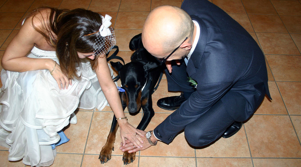Wedding Dog Specialist - Martina Ossola