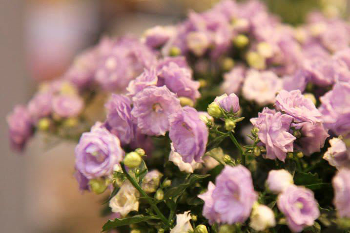 Menta Boutique Floral en el DF