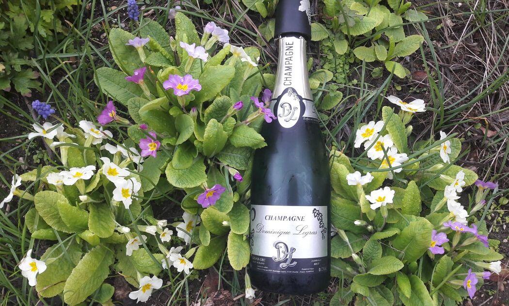 Champagne Dominique Legras