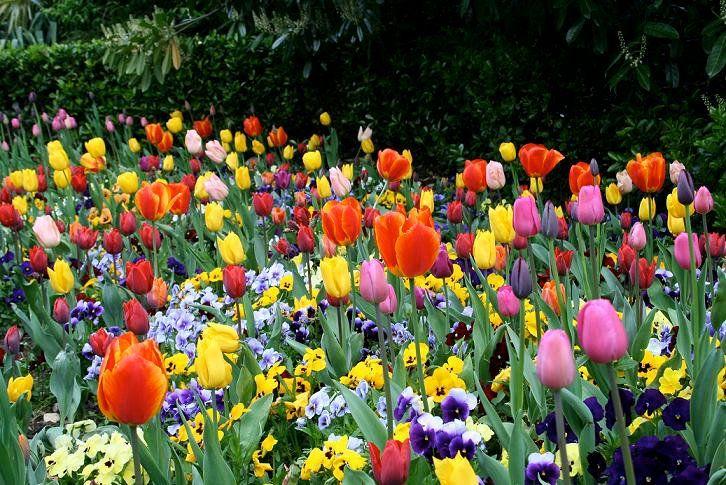 Jardín Nativa