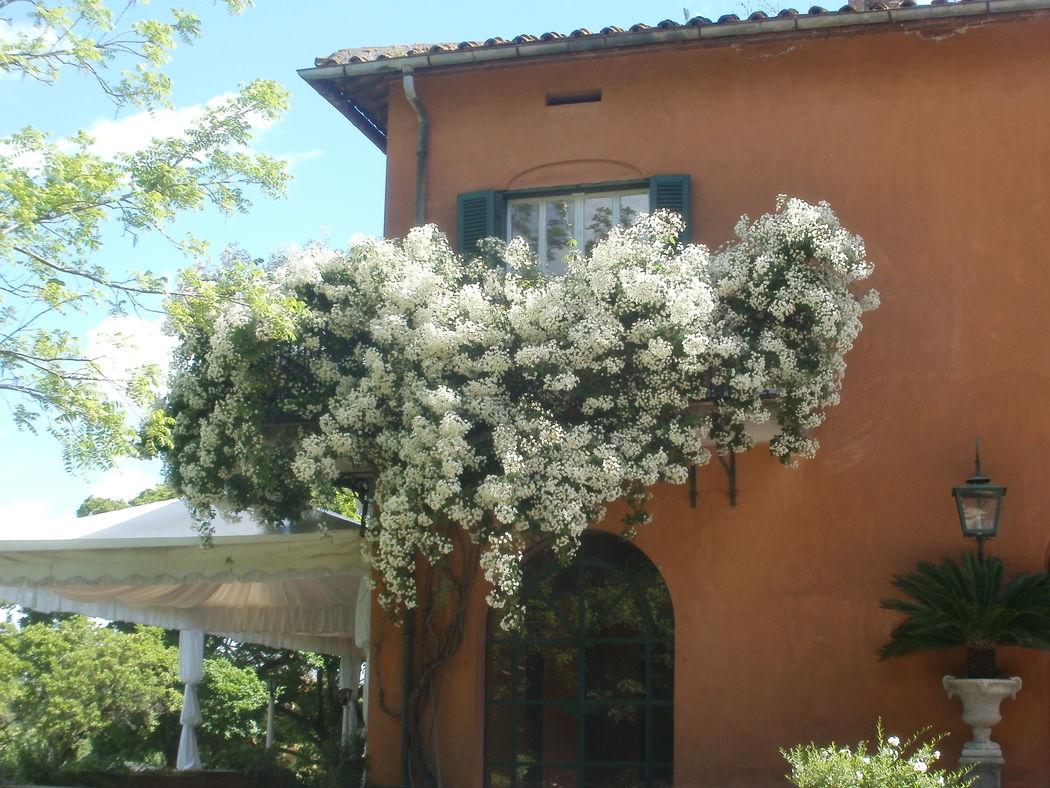 La nostra bellissima rosa Filipes