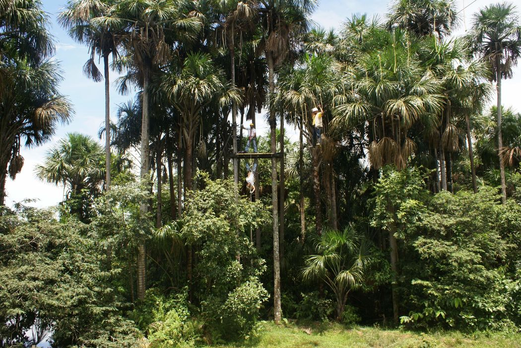 Tiuma Park