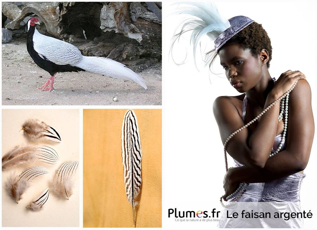 Plumes.fr
