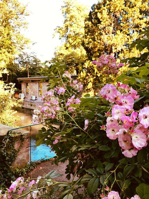 Au Moulin de La Wantzenau***