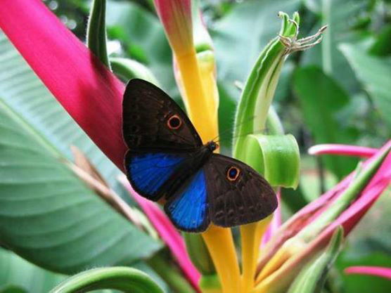 Mariposas La Trinidad Bucaramanga