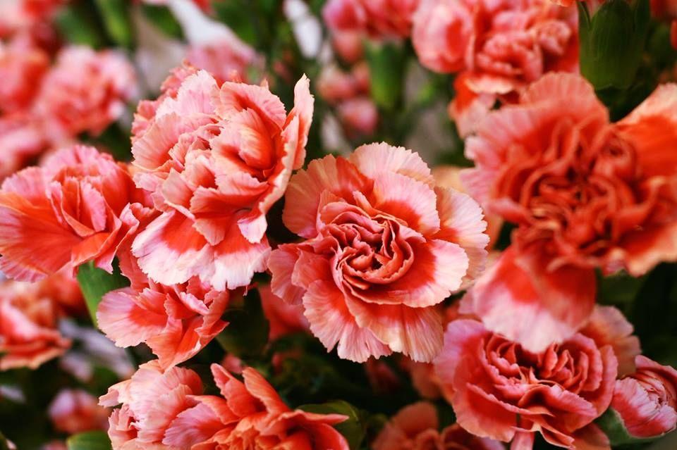 Cristhian Dior Floristería