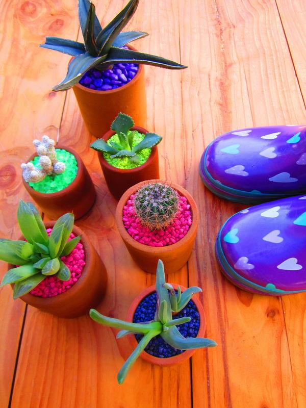Cactus Concepción
