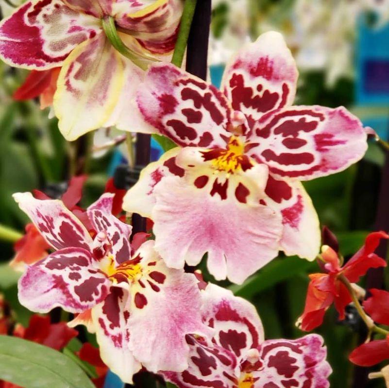 Magna Flora - Flores e Plantas Especiais