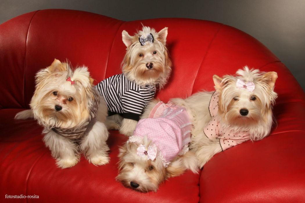 Hunde Boutique 24