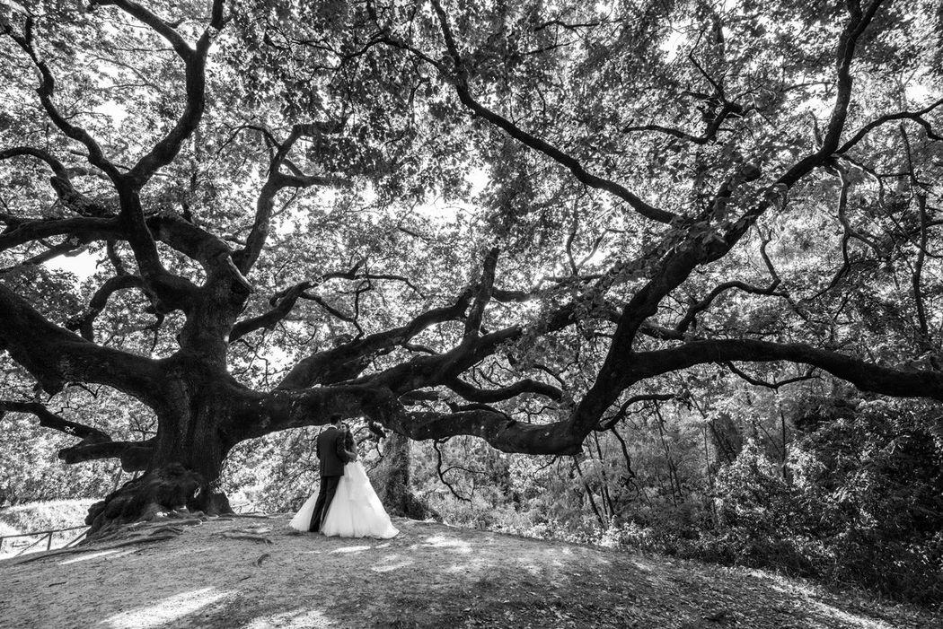 Ritratto sposi con grande quercia
