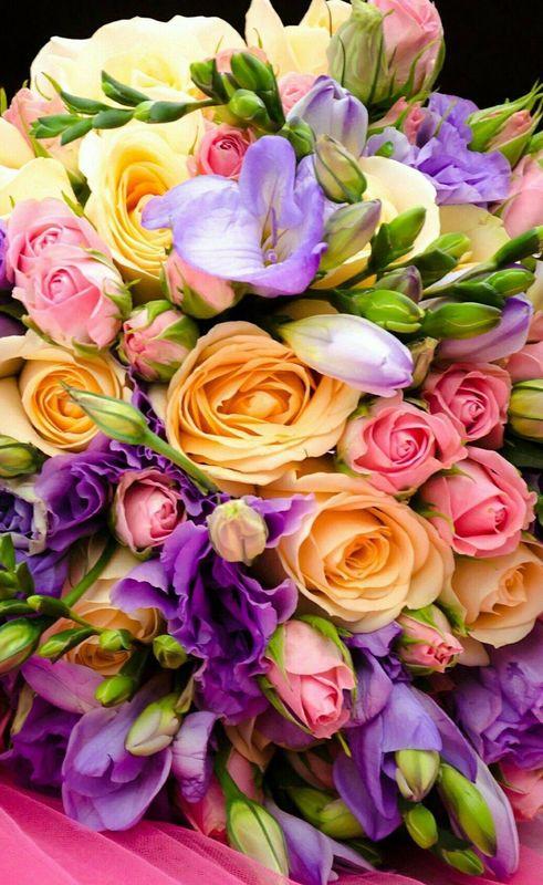 Flowering Alhaurín