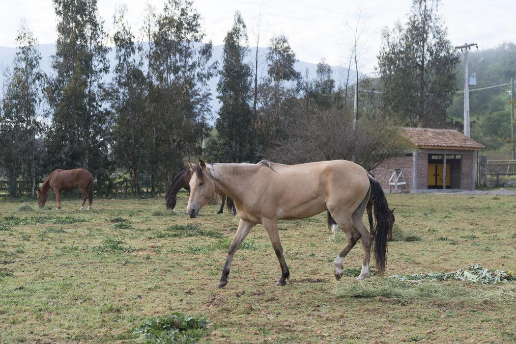 Criadero Don Gabo